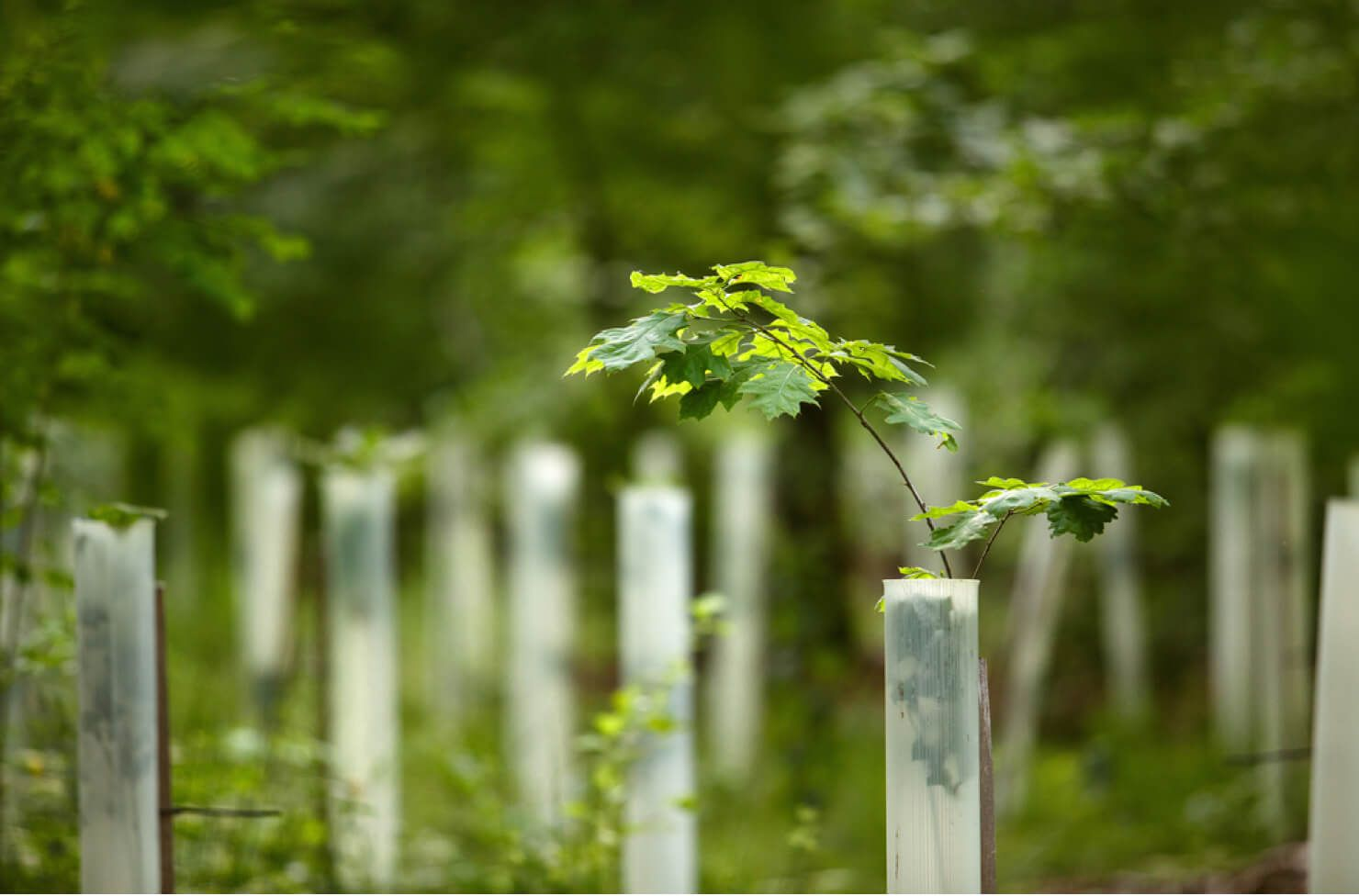 Reforestation project