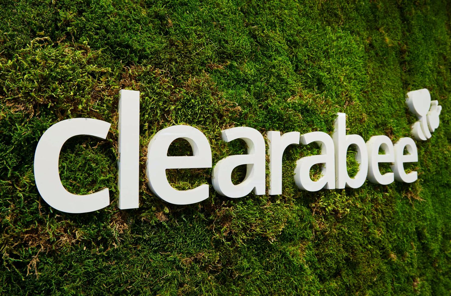 Clearabee on a moss wall