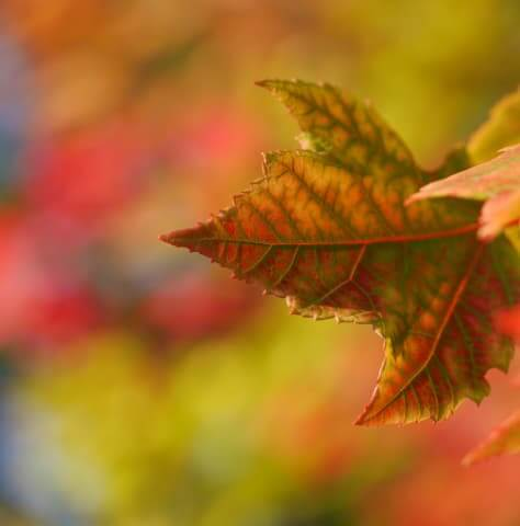 Autumn is Coming Part 1