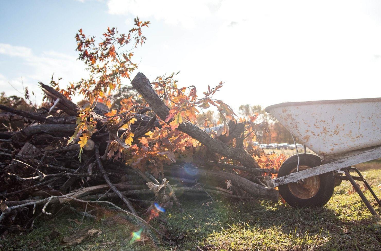wheelbarrow next to cut trees