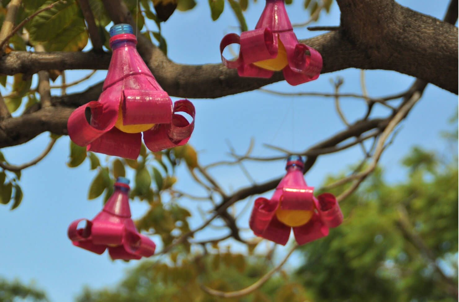 ornaments on a garden tree