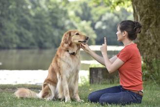 Koirankouluttaja kouluttaa koiraa