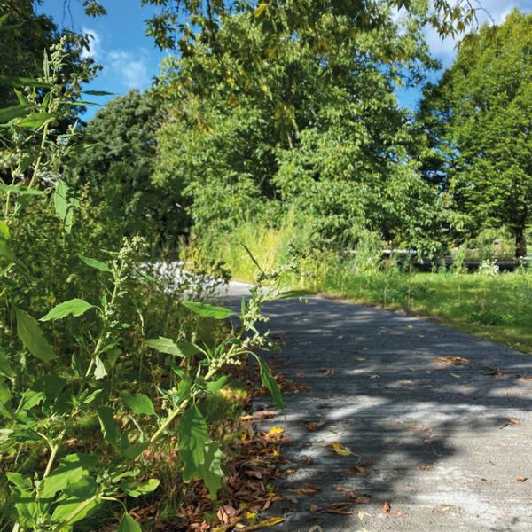 Åkeshovs Arboretum4