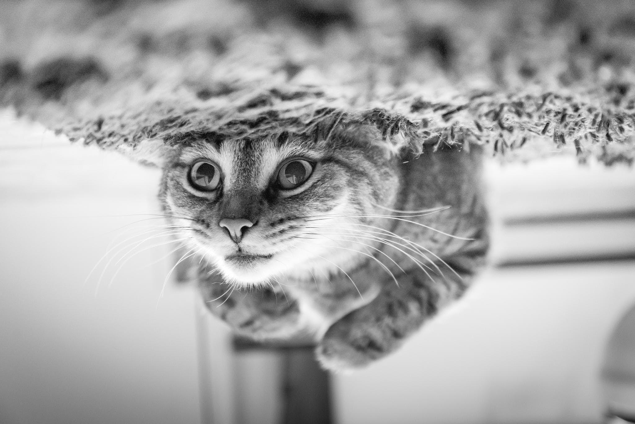 A cat upside down