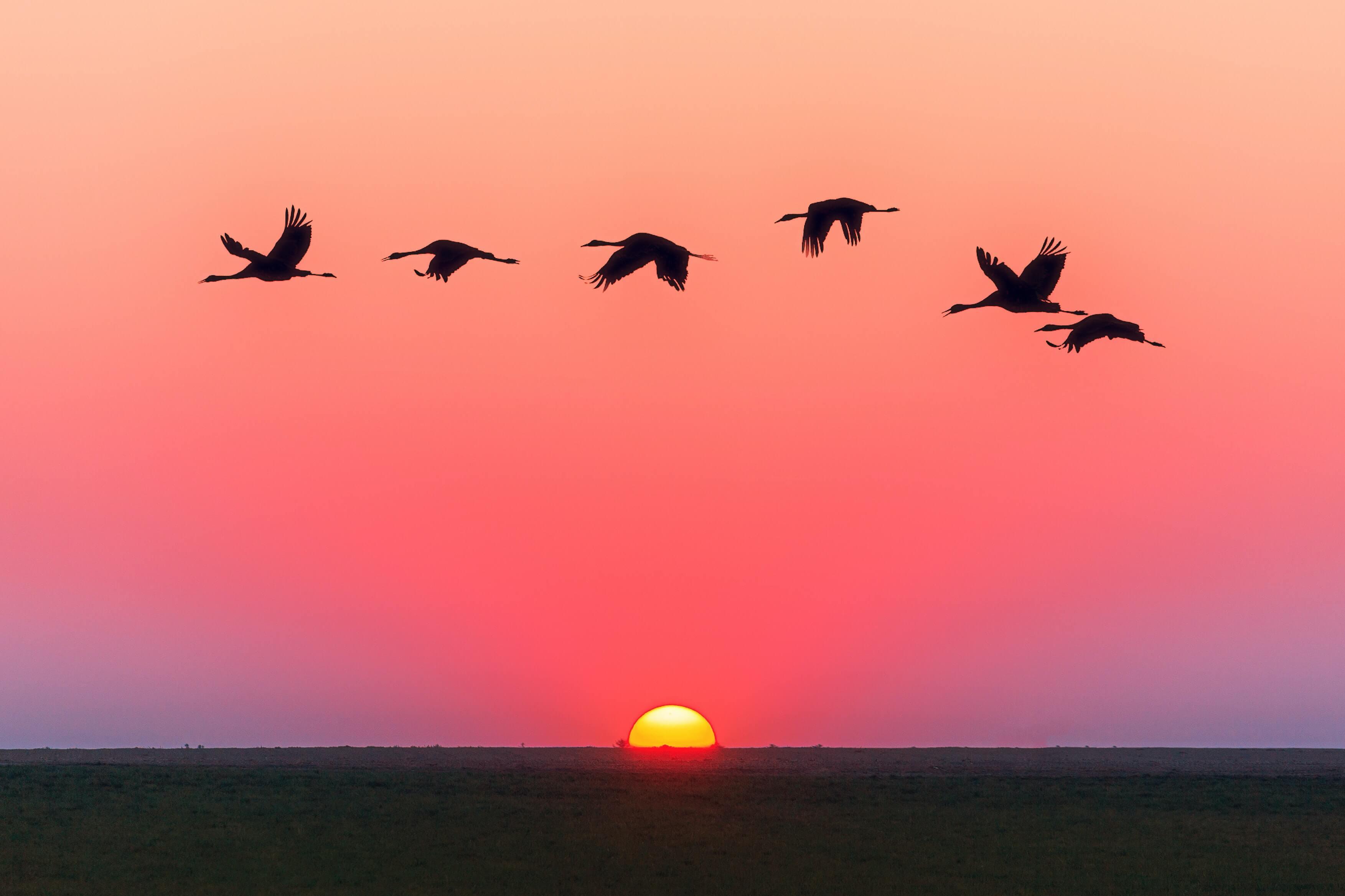 Sunrise with flying ducks