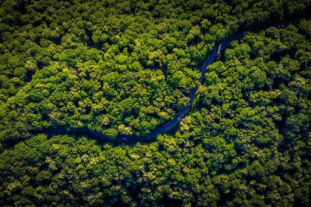 Arial view of the amazon rainforest and river