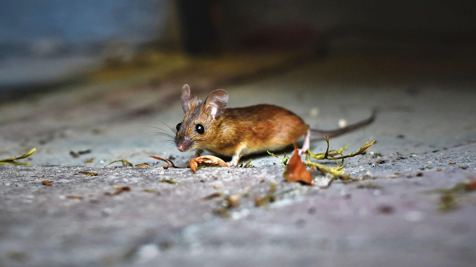 Mäuse erkennen
