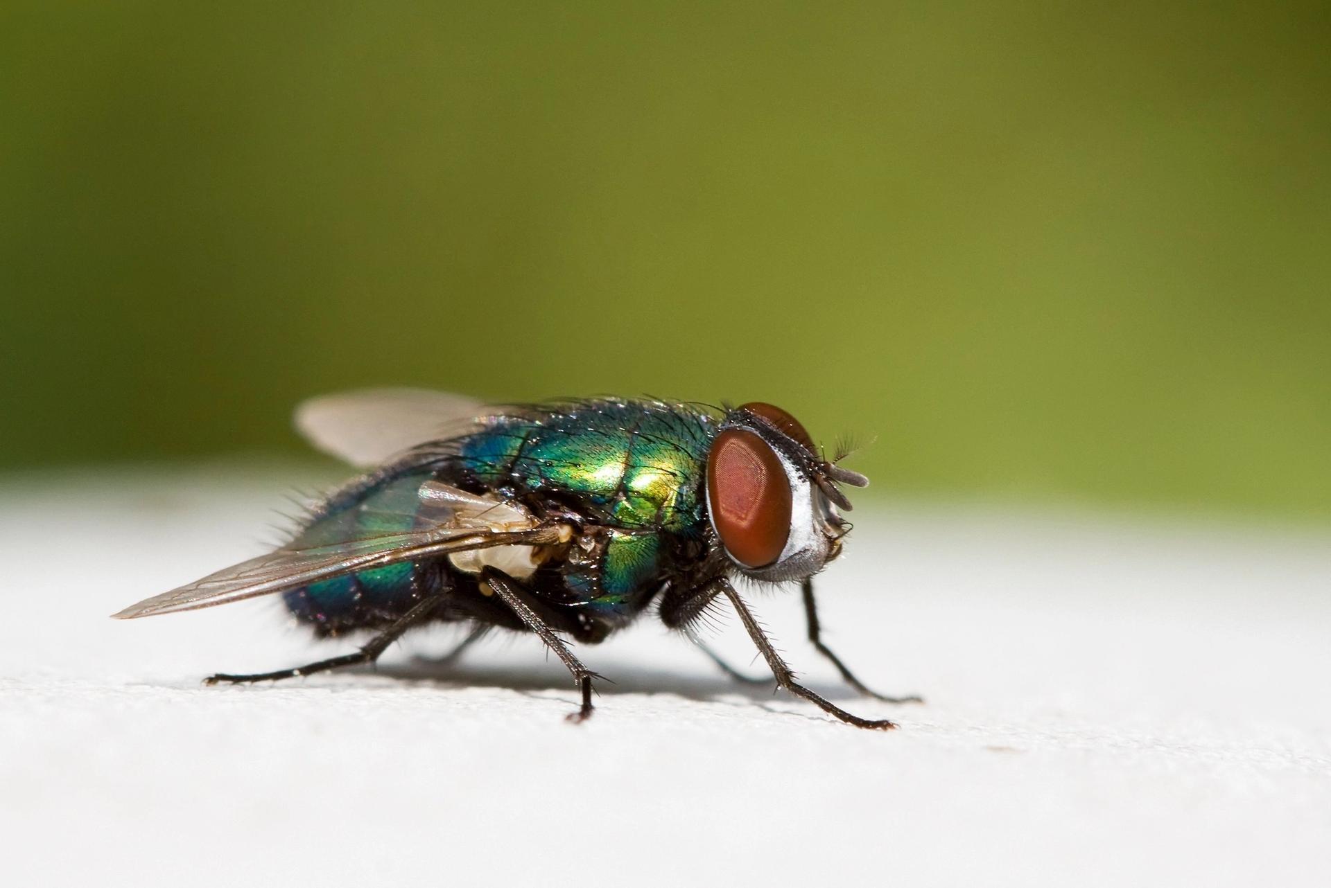 se débarrasser des insectes