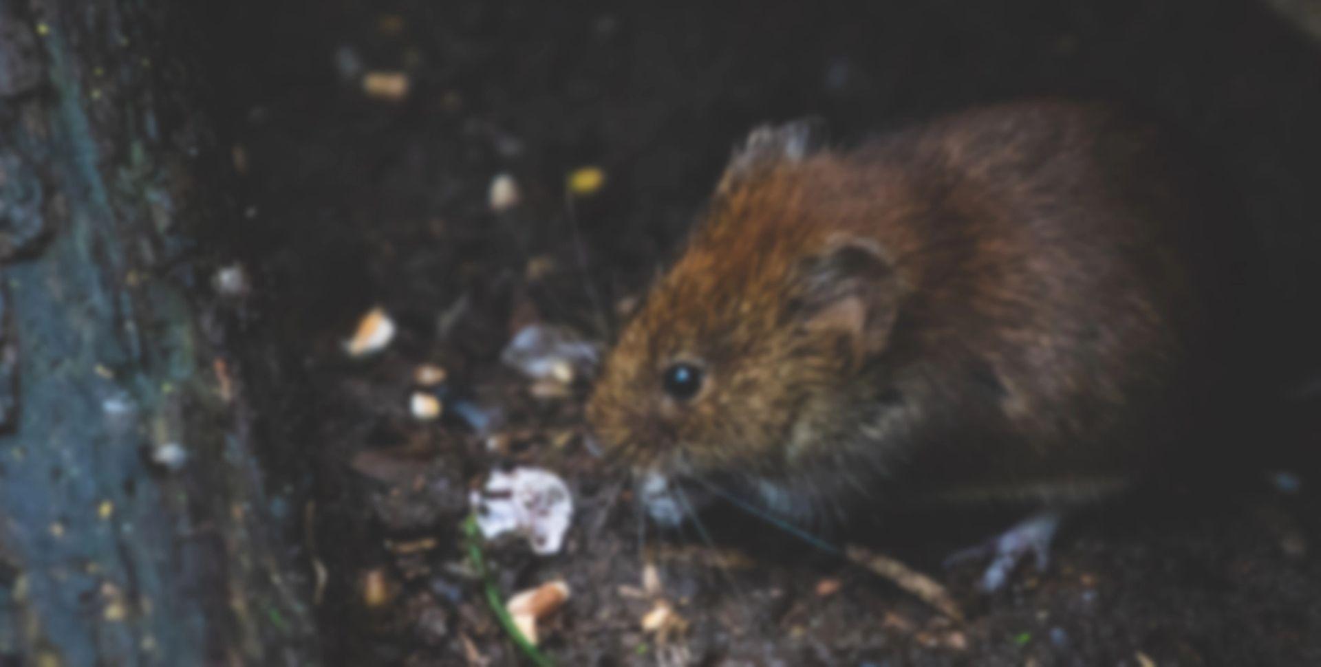 Rottebekæmpelse for industrien - det klarer Anticimex