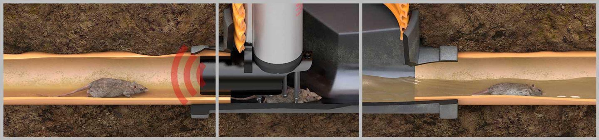Smart Pipe -effektiv rottebekæmpelse i kloakkerne - fra Anticimex