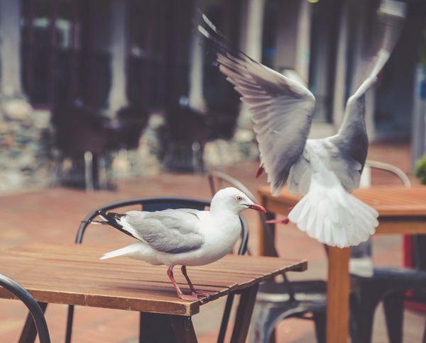Lintusuojaukset ja -torjunta