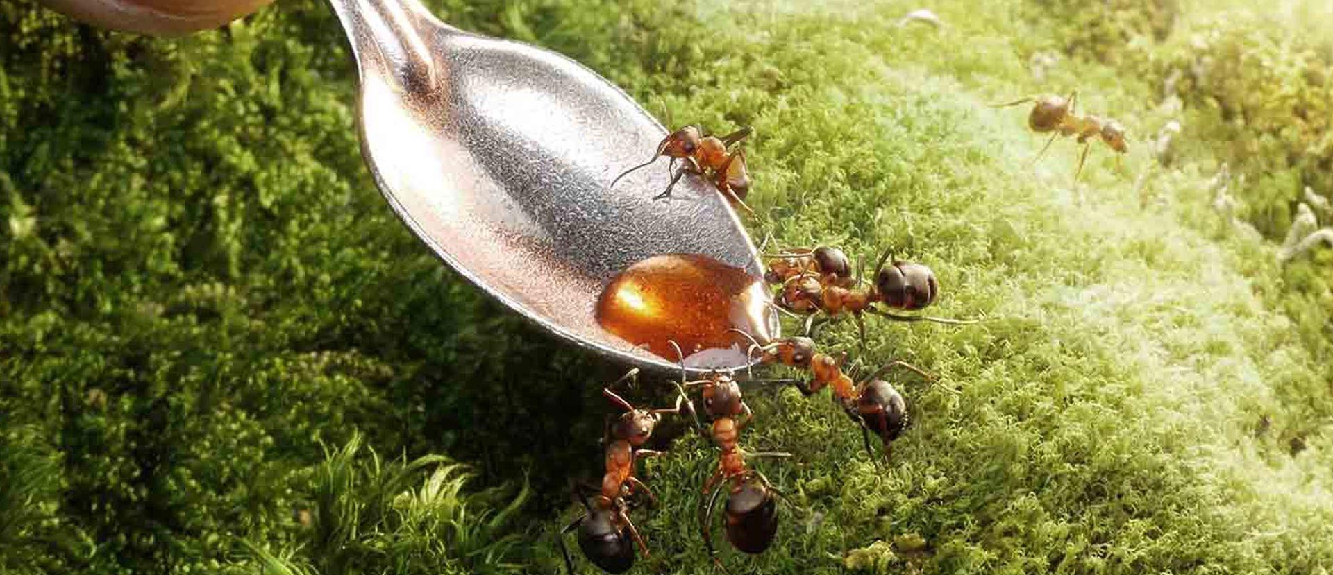 Jokakeväinen muurahaisongelma