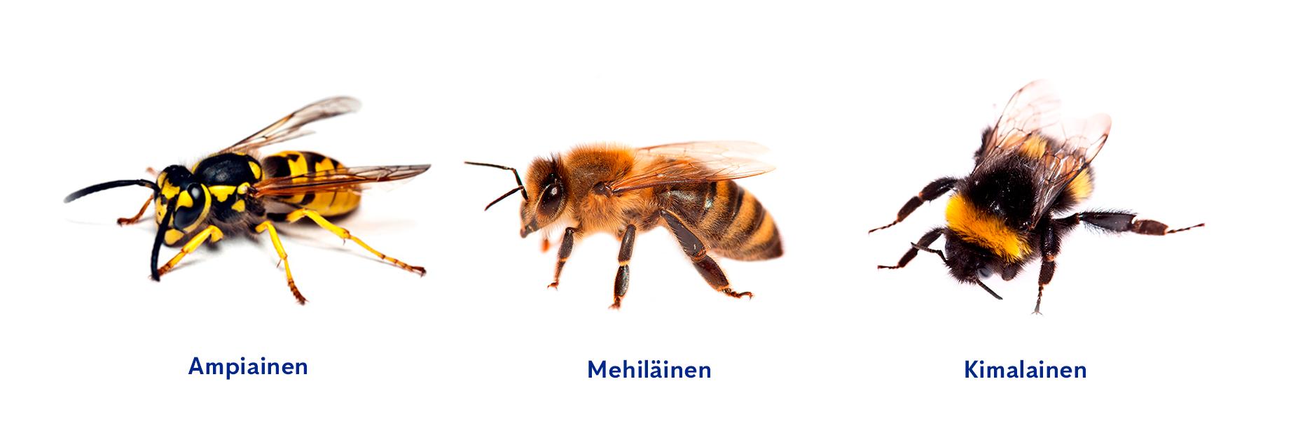 Ampiainen, mehiläinen ja kimalainen