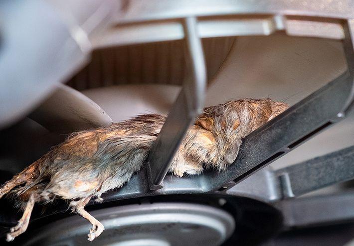 Odottamattomat kulut rotista