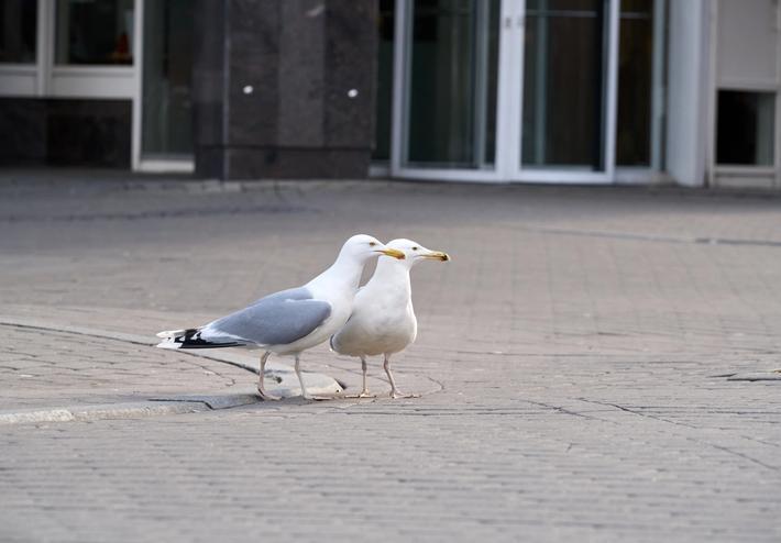 Lintujen torjunta kiinteistöissä