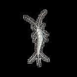 Schädlinge bestimmen - Silberfische
