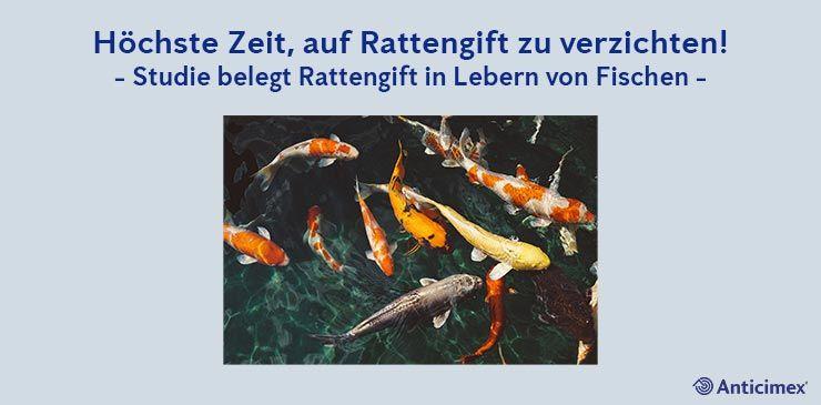 Rattengift in Lebern von Fischen