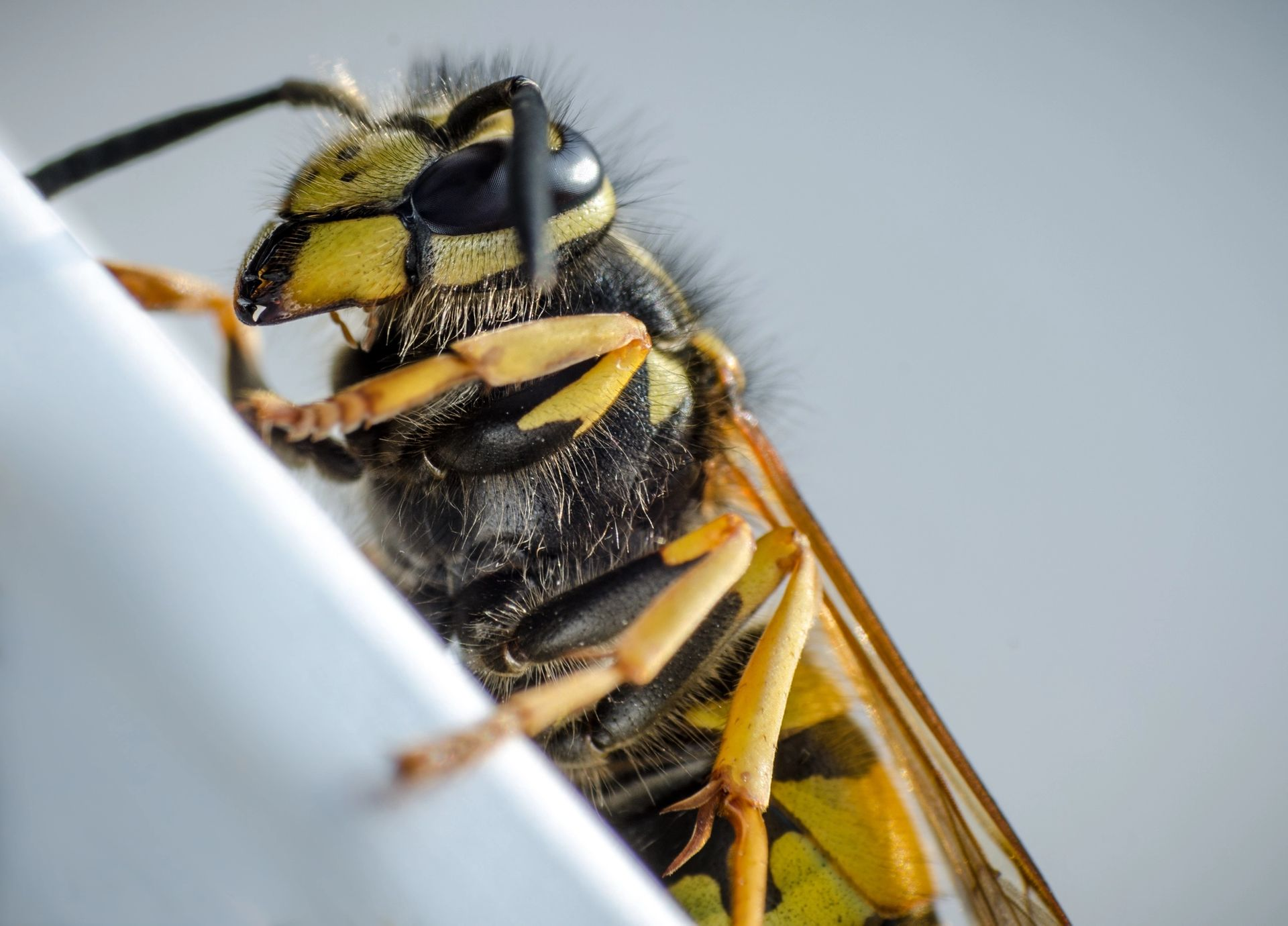 Was tun bei einem Wespenstich