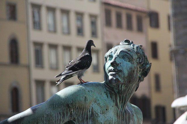 Taube auf einer Statue