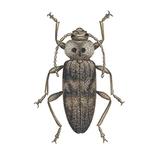 Schädlinge bestimmen - Käfer