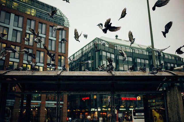 Tauben in der Innenstadt