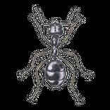 Schädlinge bestimmen - Ameise