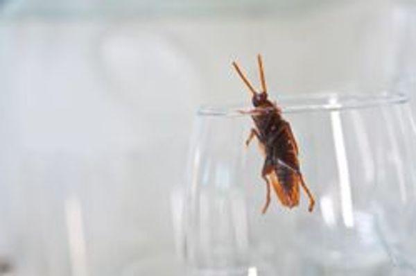Anticimex Sicherheitsdatenblätter Insekten