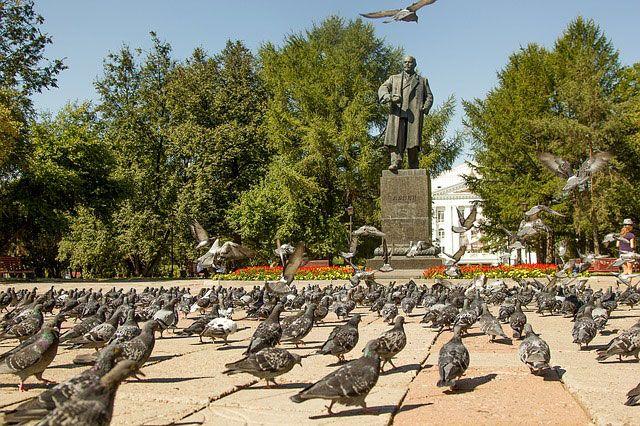 Tauben auf einem Platz
