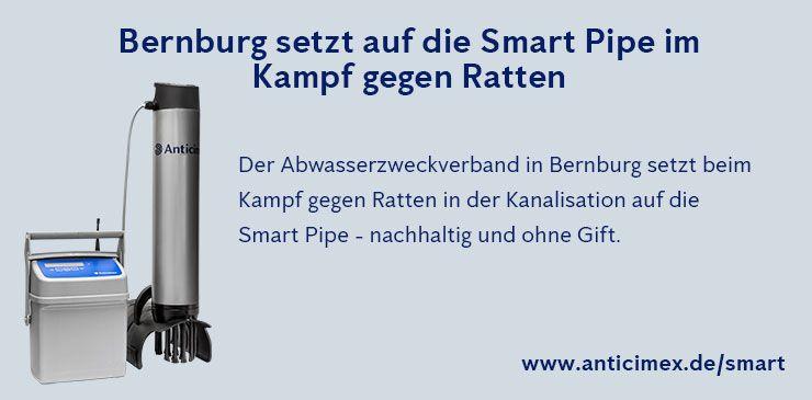 Anticimex Smart Pipe Rattenbekämpfung Bernburg