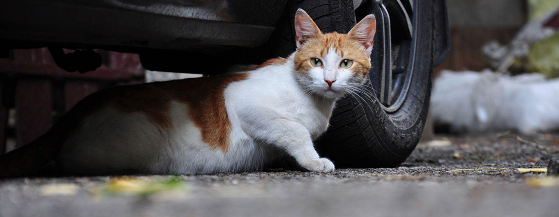 Veilig en diervriendelijk katten weren of vangen