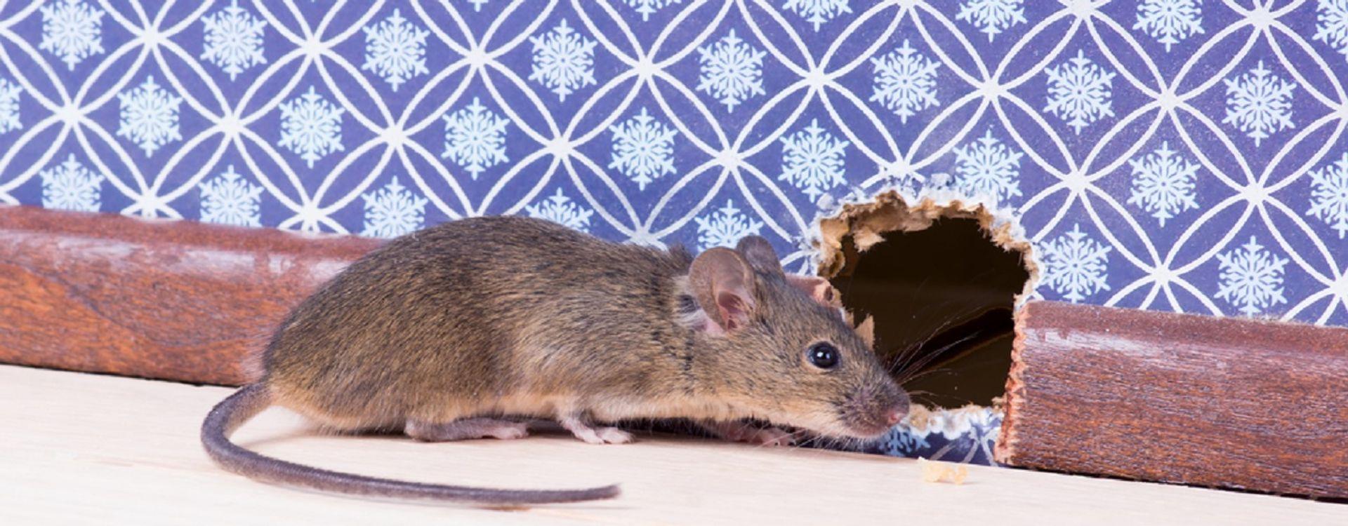 Last van muizen in uw bedrijf?