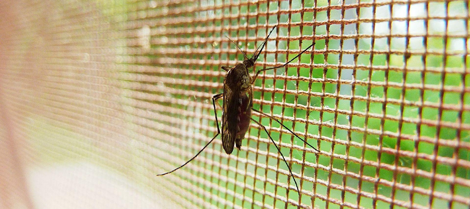 Last van muggen?