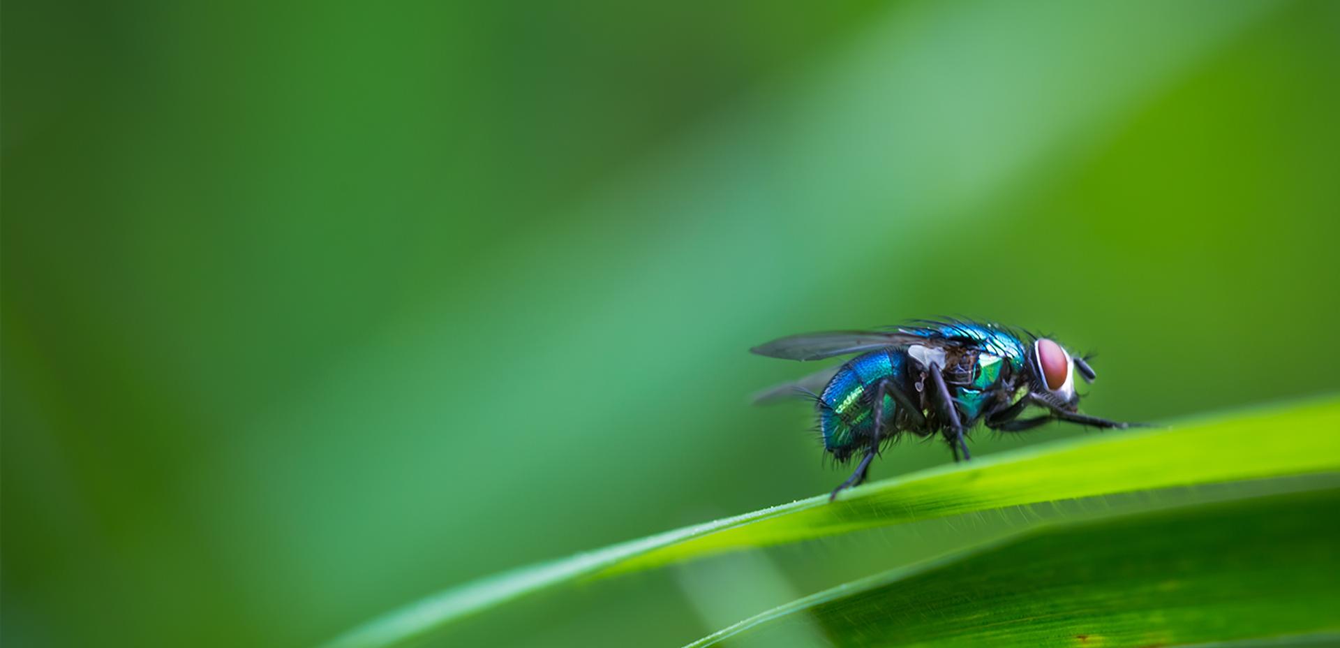 moscas-hero