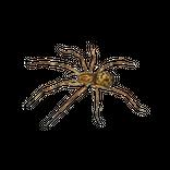 Aranhas-thumbnail