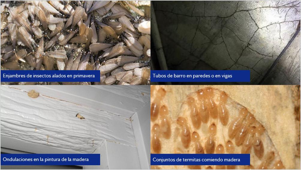 como-detectar-termitas