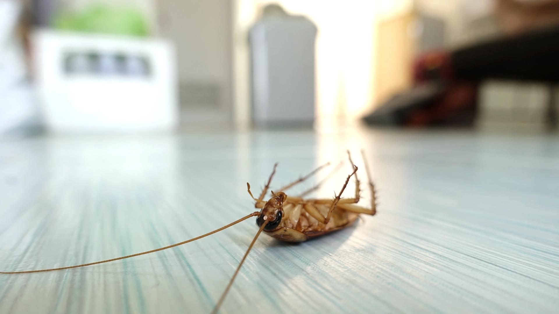 Fumigar Cucarachas