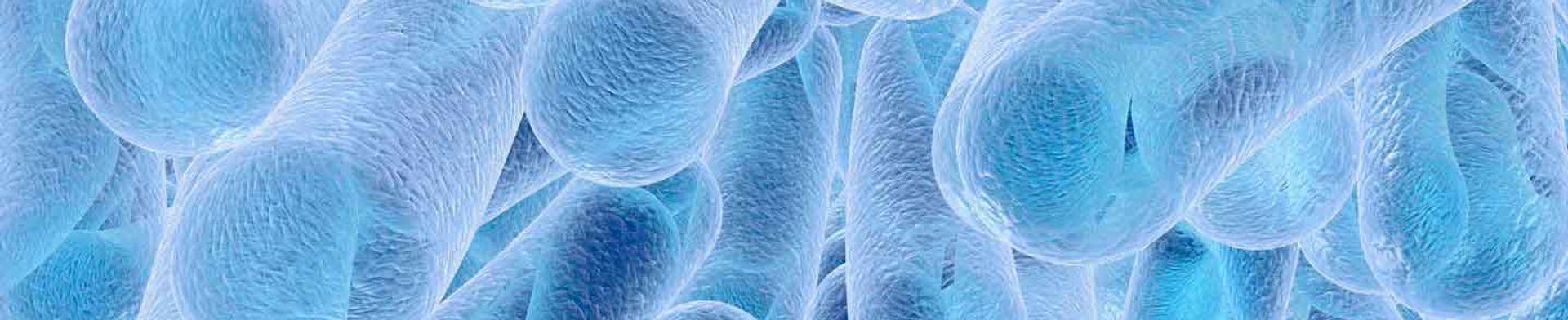 Control y Prevención de Legionella
