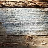 Brunrötessvamp på fasad