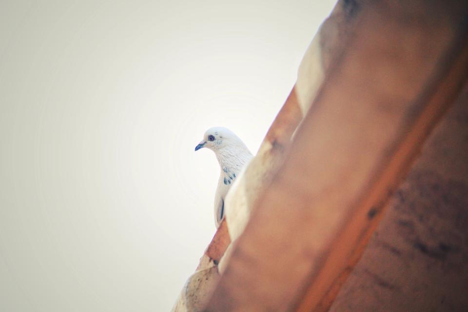 Incipit Le Pigeon Patrick Süskind