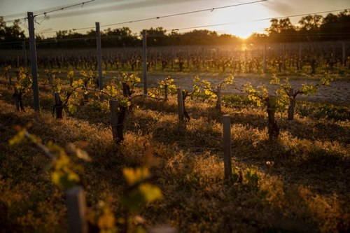 morning light through vines