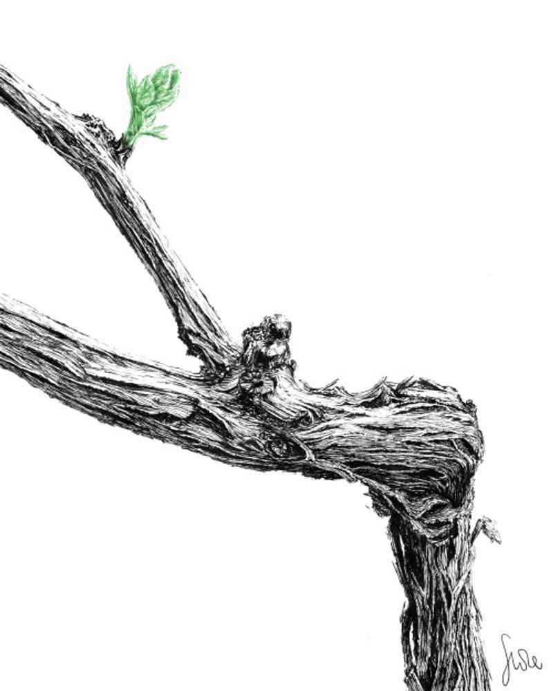 pruning drawing