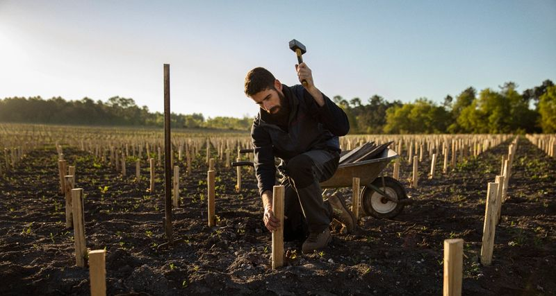 hammering stakes new vines