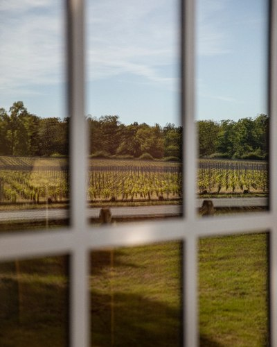 vines reflection in window