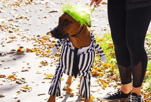 Dog in a costume