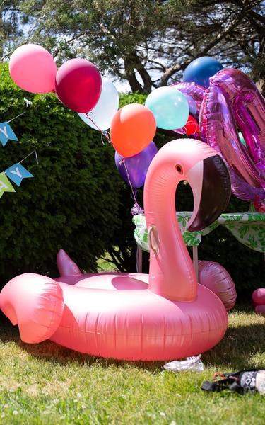 Flamingo and