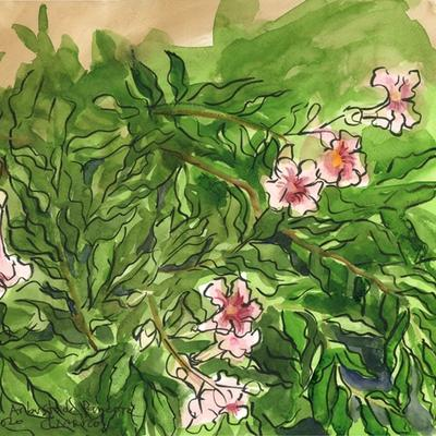 Bignonia rosa o arbusto de Pandora