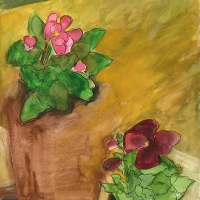 Begonia y pensamiento