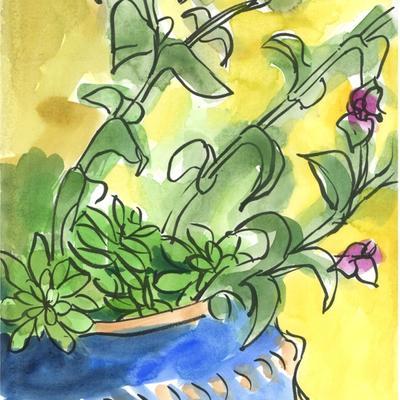 Zebrina en flor