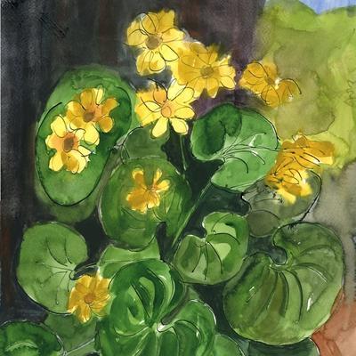 Farfugium japonicum o boina de vasco
