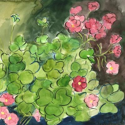 Oxalis articulata o trébol rosa